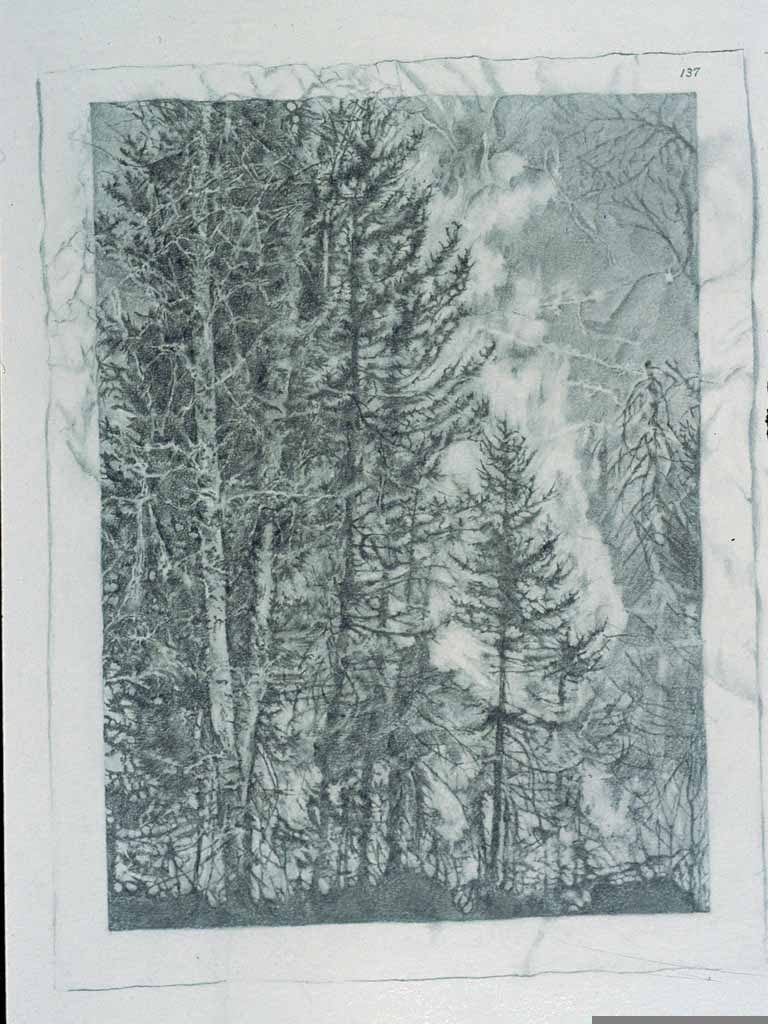 Forest Fire - drawing by Penny McCarthy