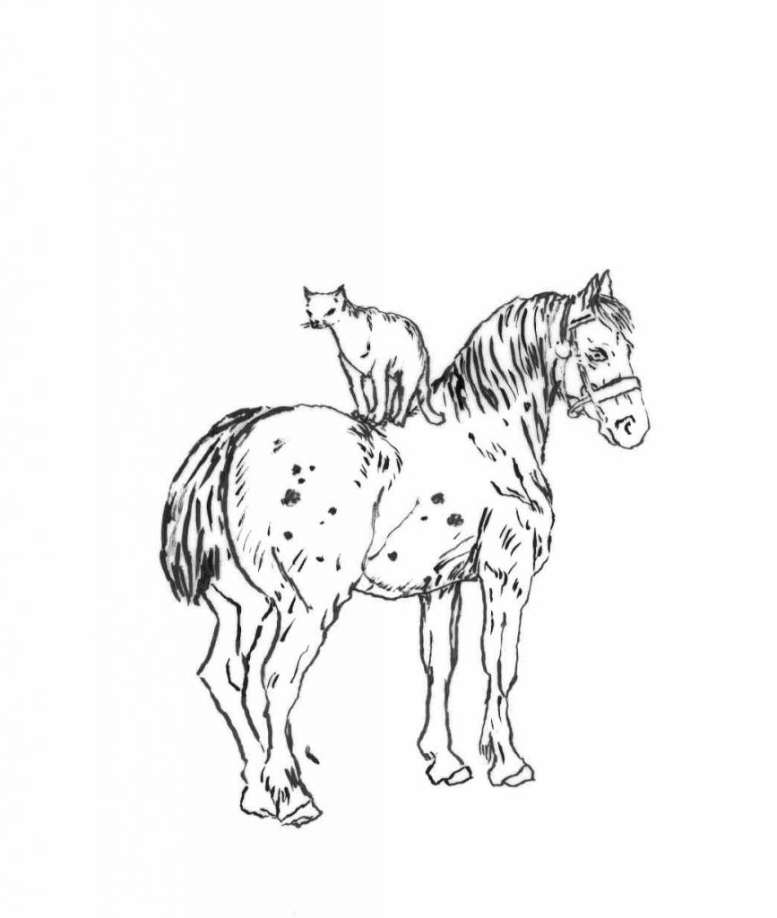 Cat on Horse - drawing by Penny McCarthy