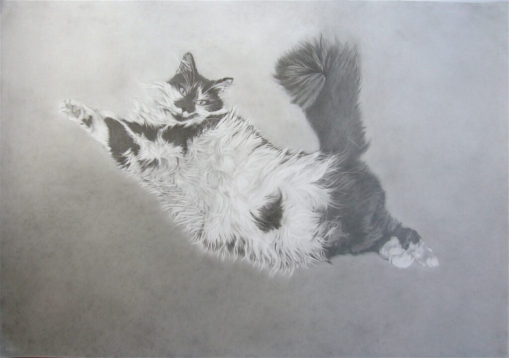 Bandit  100 x 70 cm Pencil on paper 2020